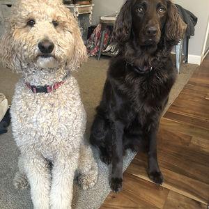 Sue S Dogs Web